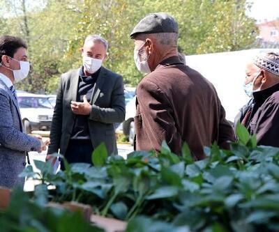 Çiftçilere 60 bin biber fidesi dağıtıldı