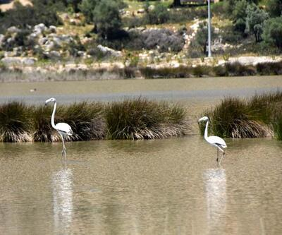Noel Baba Kuş Cenneti'nde bu yıl 2 flamingo ayrılmadı