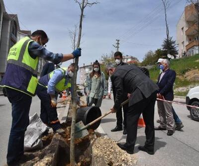 Keşan'da düzenlemesi yapılan caddeye 132 ıhlamur fidanı dikildi