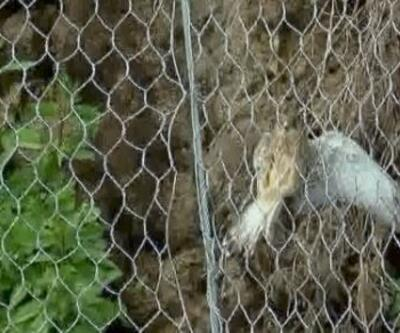 Kuşları öldüren çelik ağ sökülüyor