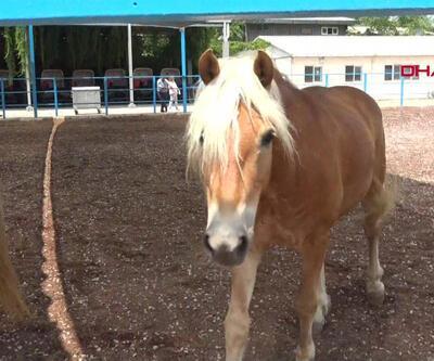 İzmir'deki atlara ne oldu?
