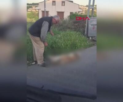 Sarıyer'de öldürülen köpek ilçeyi ayağa kaldırdı