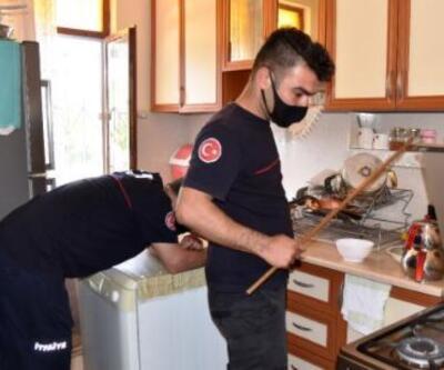 Evinin mutfağında yılanla karşılaştı