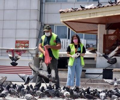 Tarsus'ta kapanma süreci boyunca sokak hayvanlarına tam destek