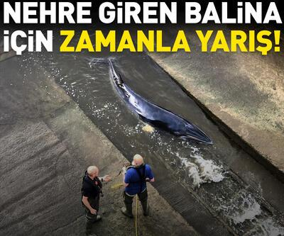 Nehre giren balina için zamanla yarış!