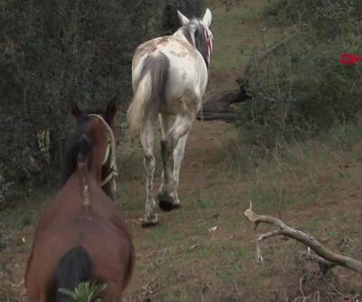 Kayıp atlarla ilgili yeni iddia