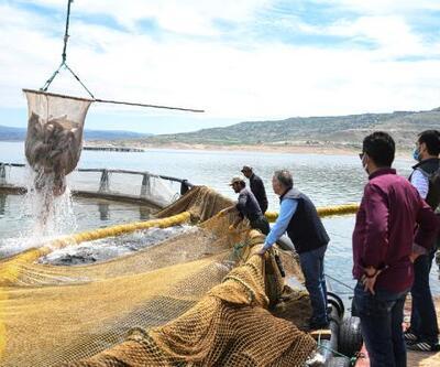 Denizi olmayan Kayseri'de somon üretimi