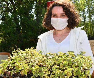 Samsun Büyükşehir Belediyesi'nden 'tıbbi aromatik bitki' desteği
