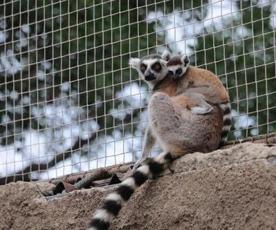 Darıca Hayvanat Bahçesi'nde 'bebek' sevinci