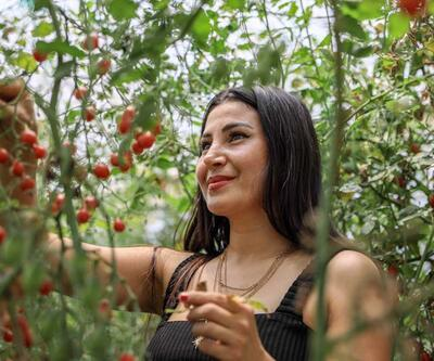 Tek domatesten ürettiği tohumlarla 4 dönüm sera kurdu