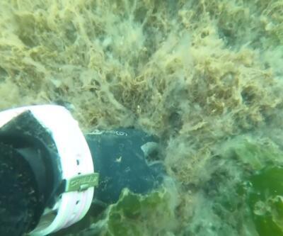 Marmara'nın dibini saran tehlike: Deniz Salyası