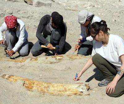 Kayseri'de 7,5 milyon yıllık yeni fosiller bulundu