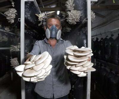10 metrekarede başladığı istiridye mantarı üretimini 3 yılda 60 tona çıkardı
