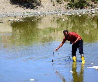 Karasu Nehri'nde balık ölümleri korkutuyor