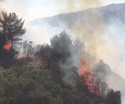 Aydın'da orman yangını... 100 dönümlük alan kül oldu