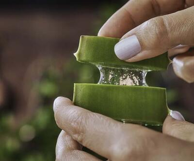 Aloe vera bitkisinin bilinmeyen faydaları