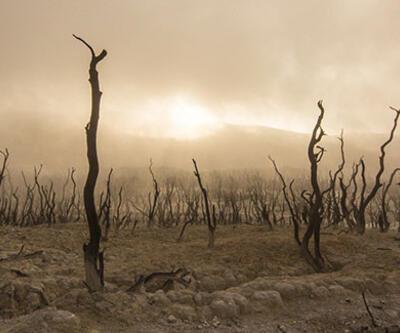 Son 20 yılın en kurağı! Kanada'da 'felaket'
