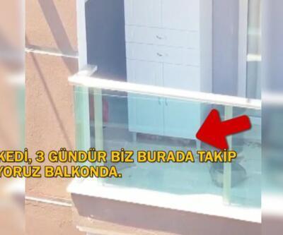 Sahipleri kediyi balkonda bırakıp tatile gitti