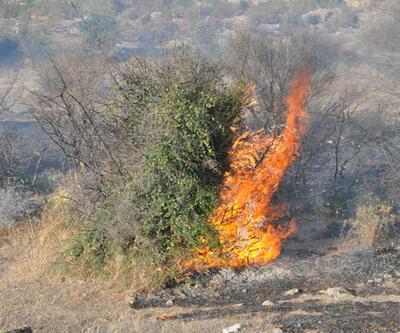Çanakkale'nin Ezine ilçesinde 10 dönüm makilik alan yandı