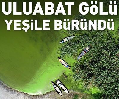 Uluabat Gölü, alg patlamasıyla yeşile büründü