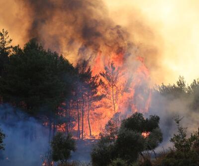 Orman yangınlarıyla mücadele sürüyor
