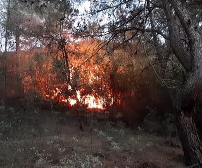 Karabük'e 10 dönüm orman yandı