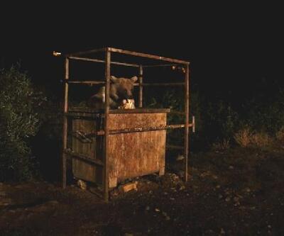 Aç kalan Avrasya bozayısı köye indi
