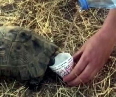 Kaplumbağaya elleriyle su içirdiler