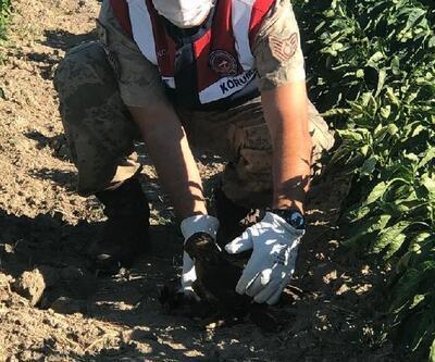 Jandarmanın bulduğu yaralı şahin tedavi edilecek