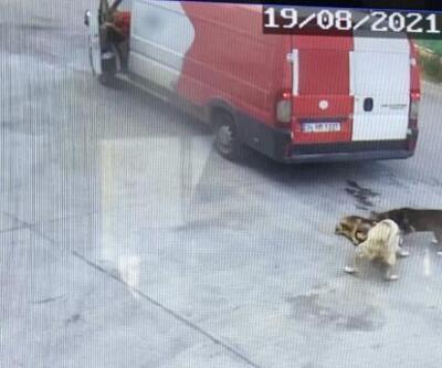 Ataşehir'de kamyonetin ezdiği 'Zeytin' öldü