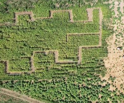 Türkiye'nin ilk 'mısır labirenti' açıldı