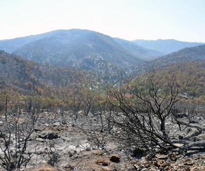 Mersin'deki orman yangınlarının zararı 27 milyon 509 bin TL