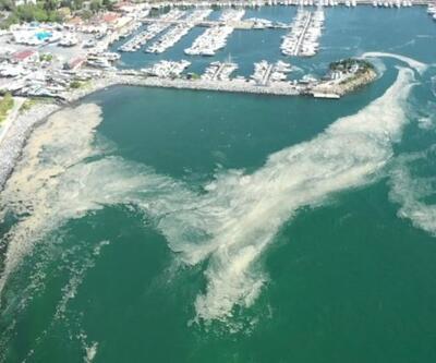Balık sezonunda deniz salyası tehlikesi