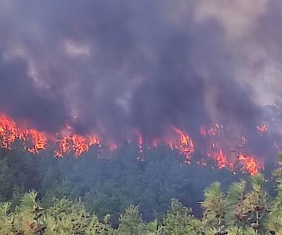 Çanakkale'de orman yangını: 30 hektar alan zarar gördü