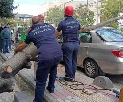 Bakırköy'de ağaç devrildi; dalın çarptığı kadın yaralandı