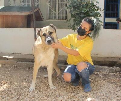 Diyarbakır'da sokak hayvanları için online konser verilecek