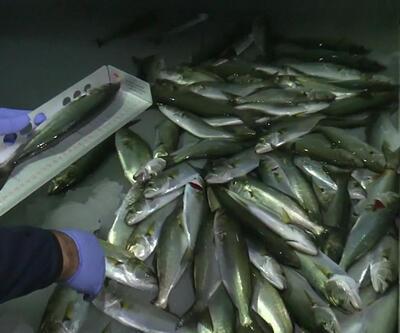 Teknelerde balık boyu denetimi