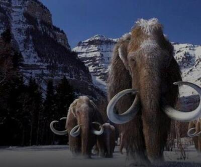 Mamutlar geri gelecek