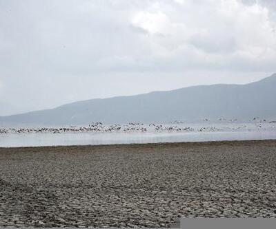 Eğirdir Gölü flamingoların uğrak yeri oldu