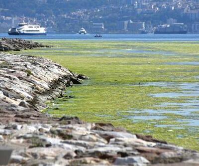 İzmir'de deniz yeşile büründü