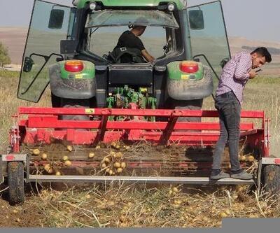 Yozgat'ta yerli tohumdan üretilen patatesin hasadı yapıldı