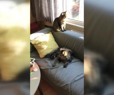 """""""Kedilerin evi değişirse olumsuz etkilenirler"""""""