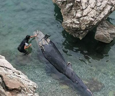 İlk kez görüldü! Antalya'da sahile vurdu