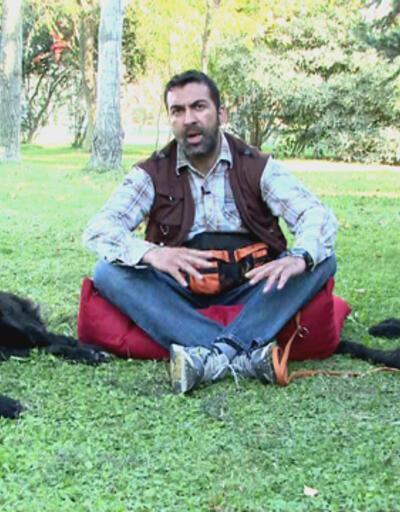 İri köpeklerin bakımında nelere dikkat edilmelidir?