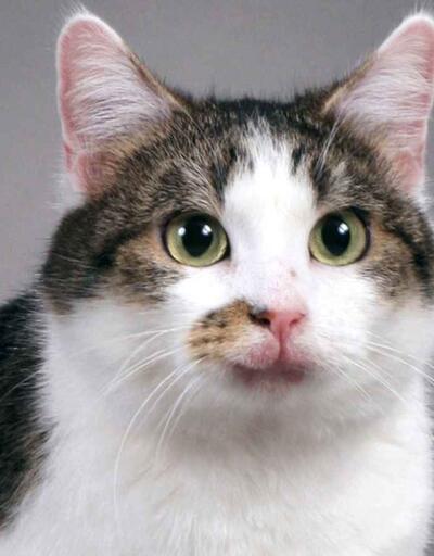 Dünyanın en önemli 12 kedisi!