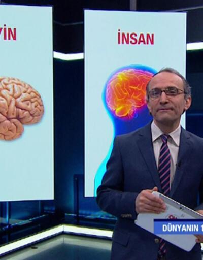 Beyniniz gördüklerine nasıl tepki veriyor?