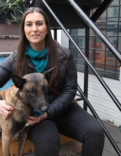 Evcil hayvan bakımı ve eğitimi