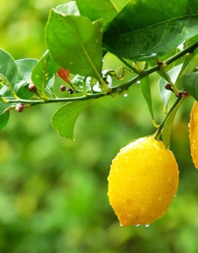 Taptaze antioksidan deposu: Juico