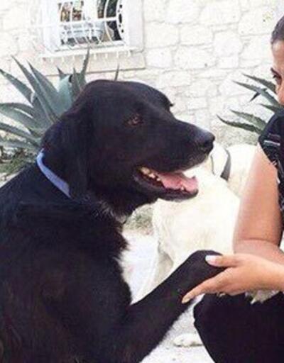 Altıok'tan hayvan hakları için 33 maddelik kanun teklifi