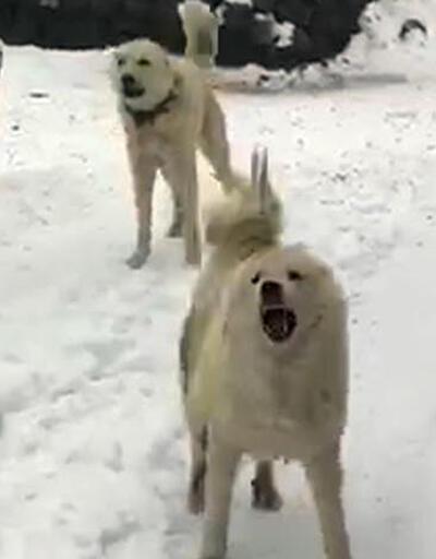Köpekler elektrik sayacı nöbetinde